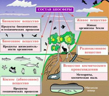 Структура биосферы Земли